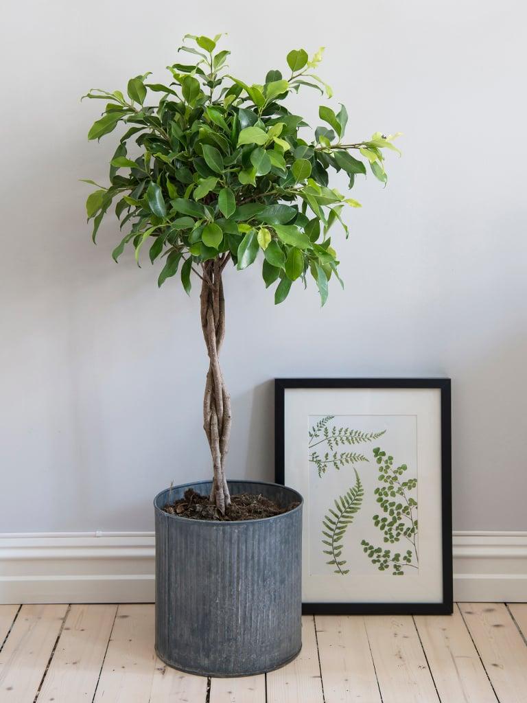 gronne-planter-VIII-DSC2309.jpg