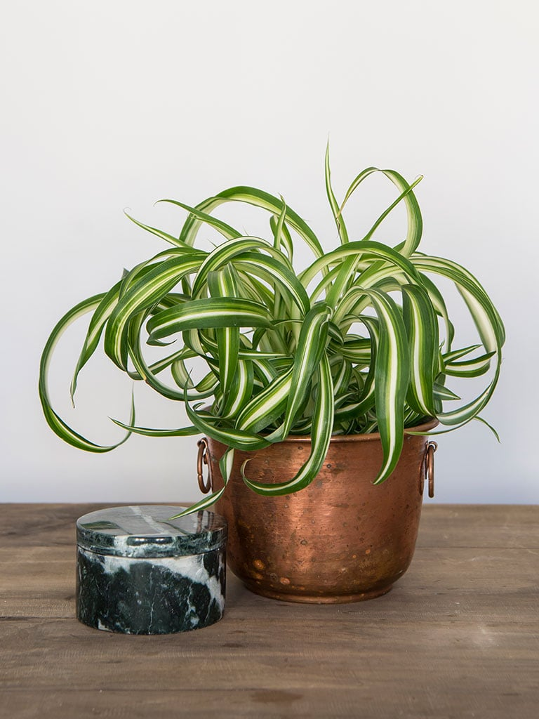 gronne-planter-IX-DSC2278.jpg