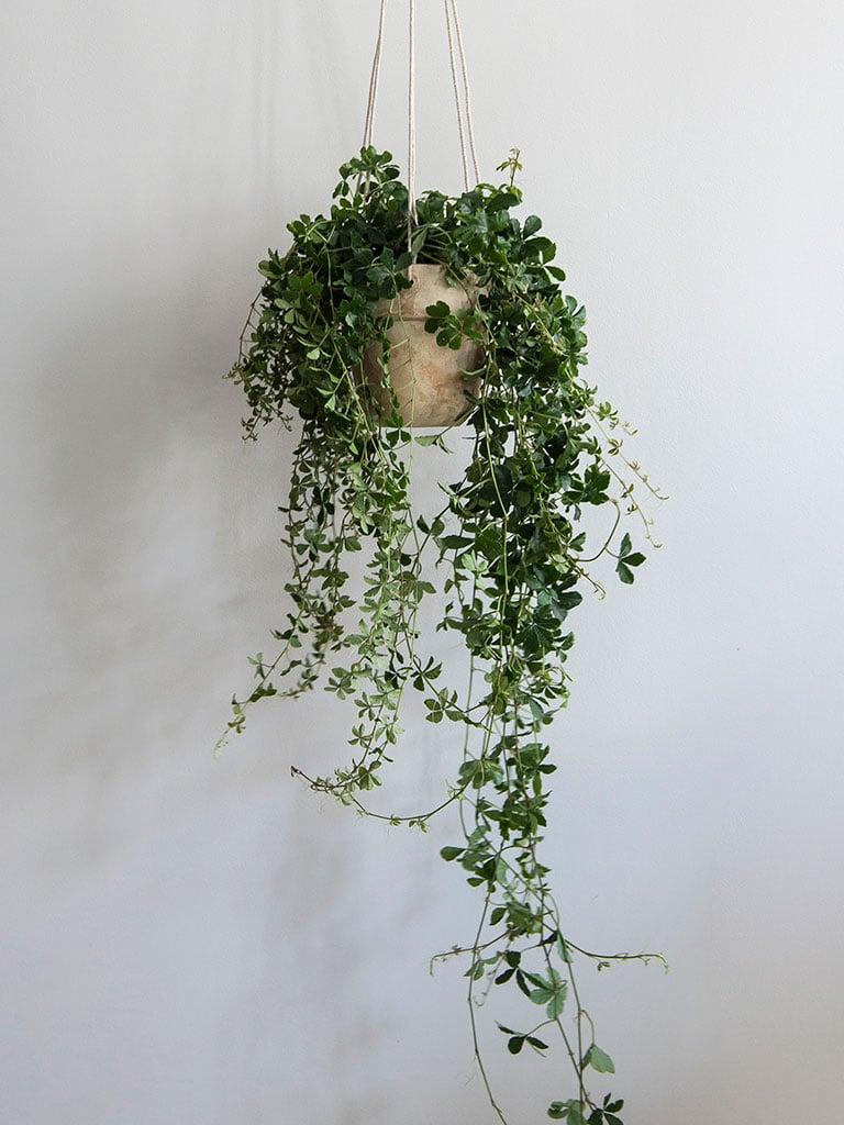 gronne-planter-X-DSC2319.jpg