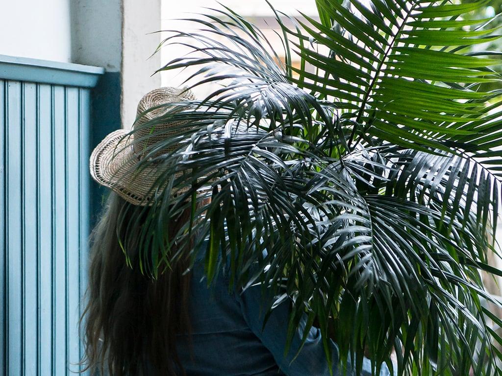 gronne-planter-B-DSC2667.jpg