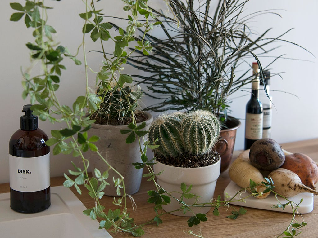 gronne-planter-C-DSC2562.jpg