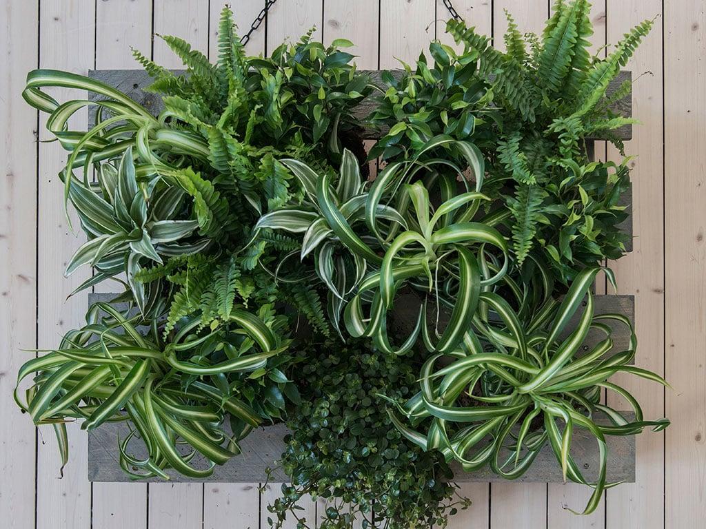 gronne-planter-E-DSC2623.jpg