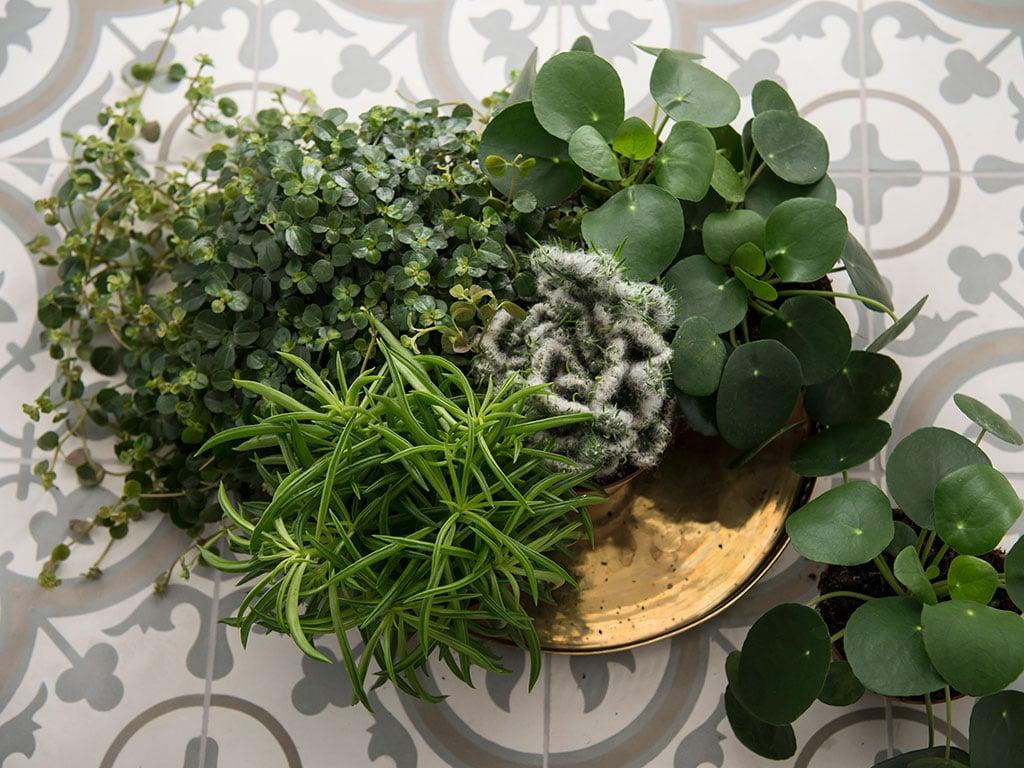 gronne-planter-H-DSC2590.jpg
