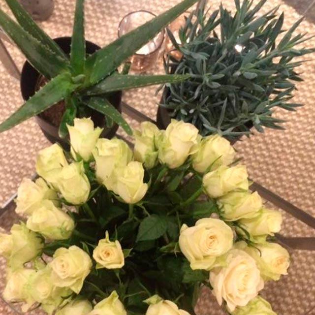 floriss-aloe-vera-roser-oliventre.jpg