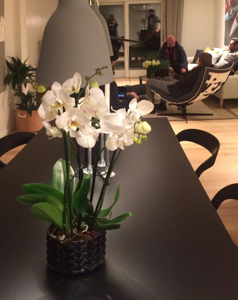 floriss-phalaenopsis-orkide.jpg