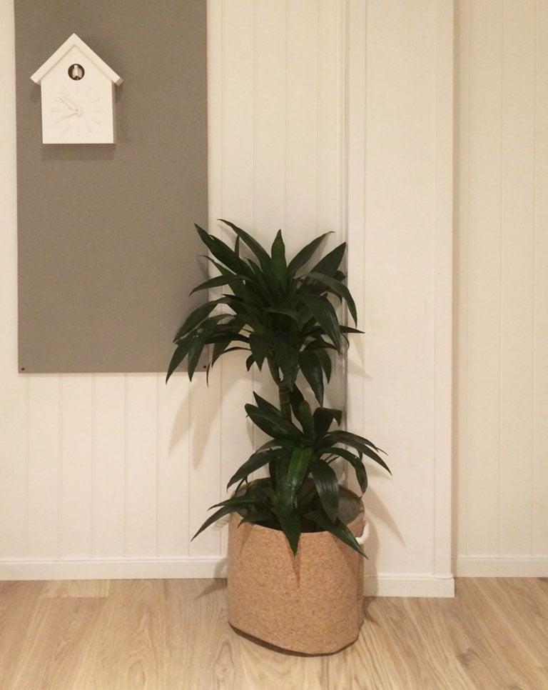 floriss-yuccapalme.jpg