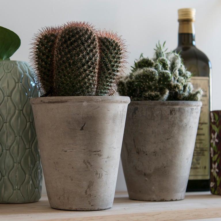 cactaceae-kaktus-1.jpg