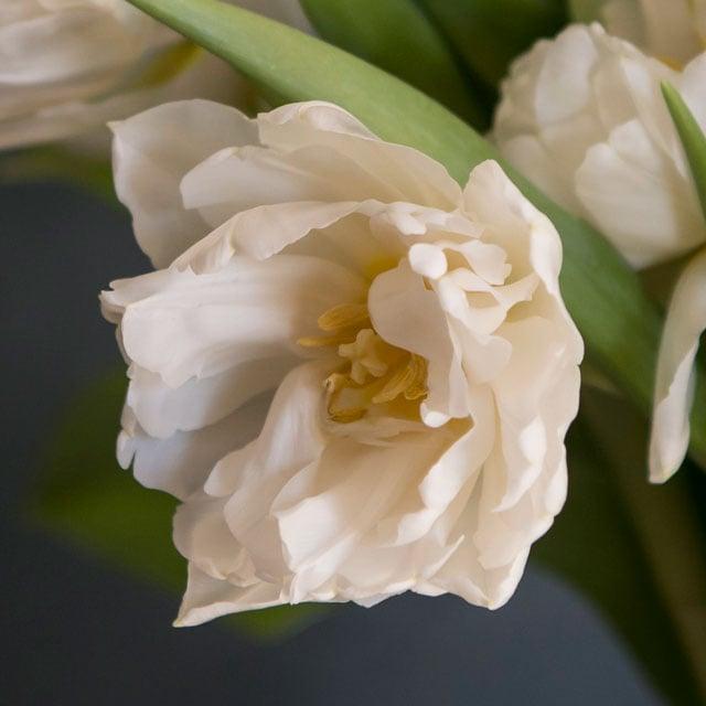 floriss-tulipaner-alicante.jpg