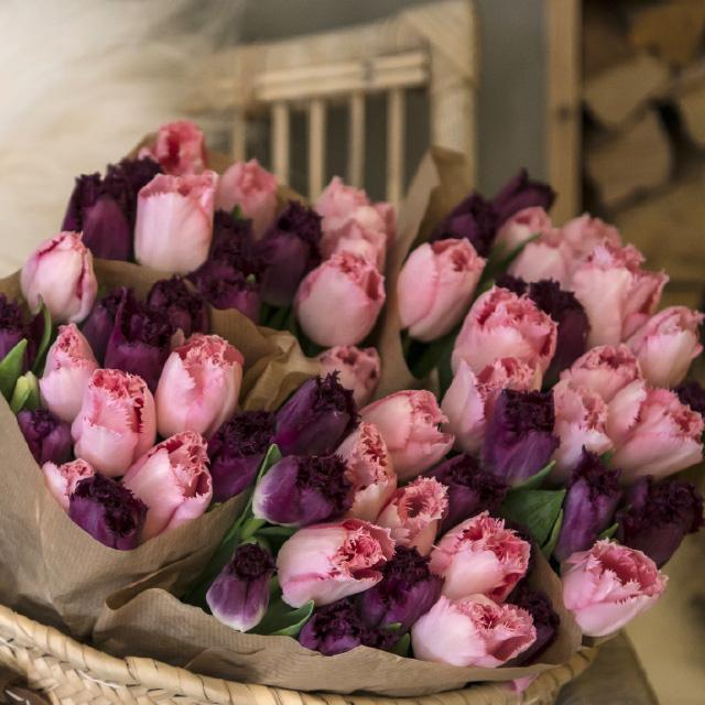 lilla-og-rosa-interiortulipaner.jpg