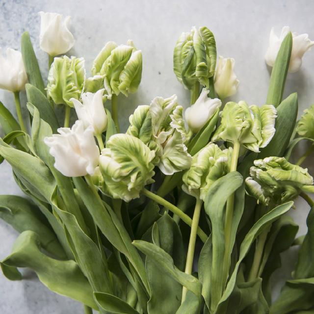 vakre-hvite-tulipaner.jpg