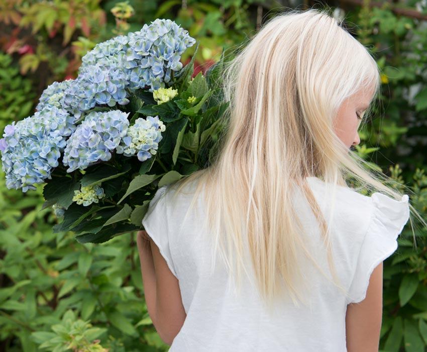 hortensia-blaa-jente.jpg
