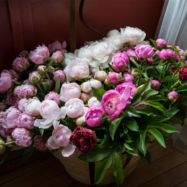 floriss-rosa-og-hvite-peoner.jpg