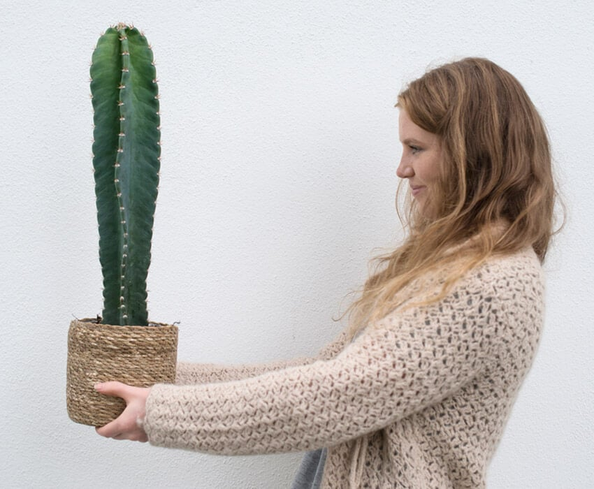 floriss-kaktus-marianne-holder.jpg