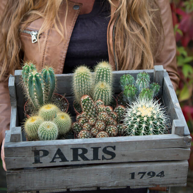 floriss-kaktus-i-kasse.jpg