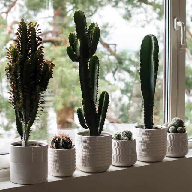 floriss-kaktus-i-vunduskarmen.jpg