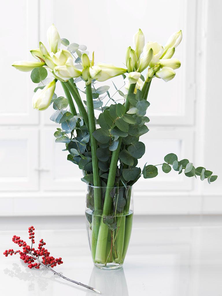 Amaryllis-hvit.jpg