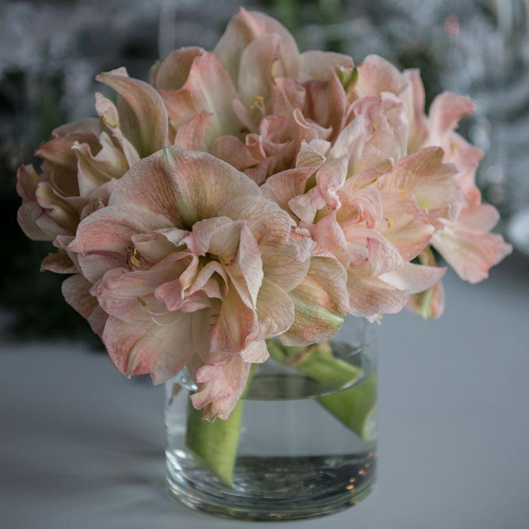 floriss-nyttaarsaften-dobble-amaryllis.jpg