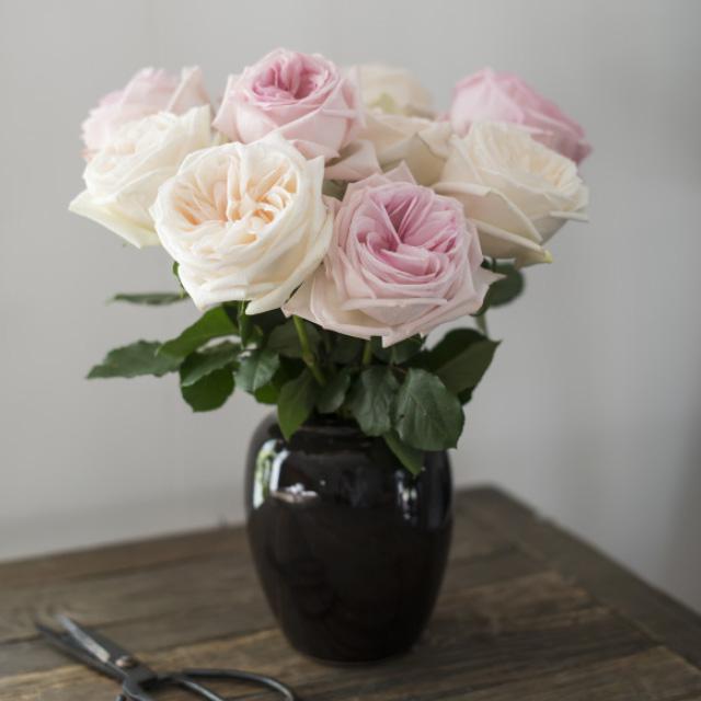 hvite-rosa-duftroser-i-vase.jpg