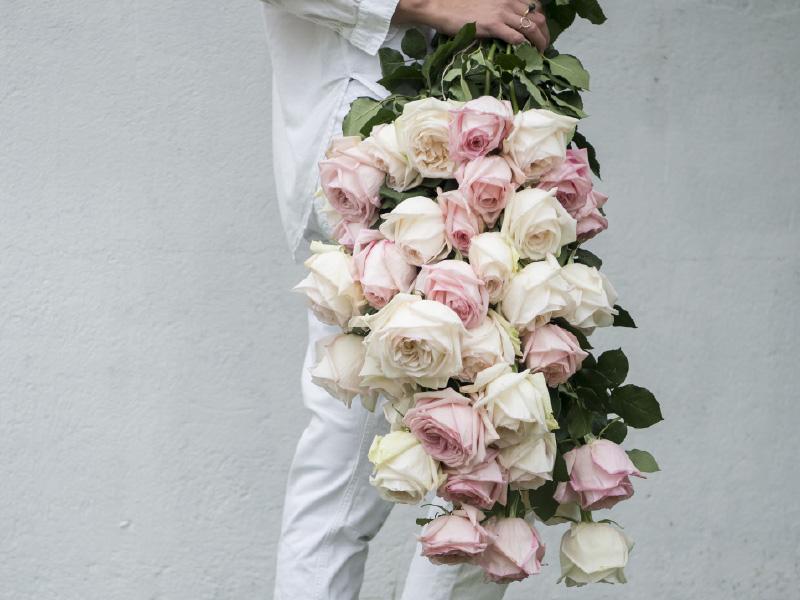 hvite-rosa-duftroser.jpg