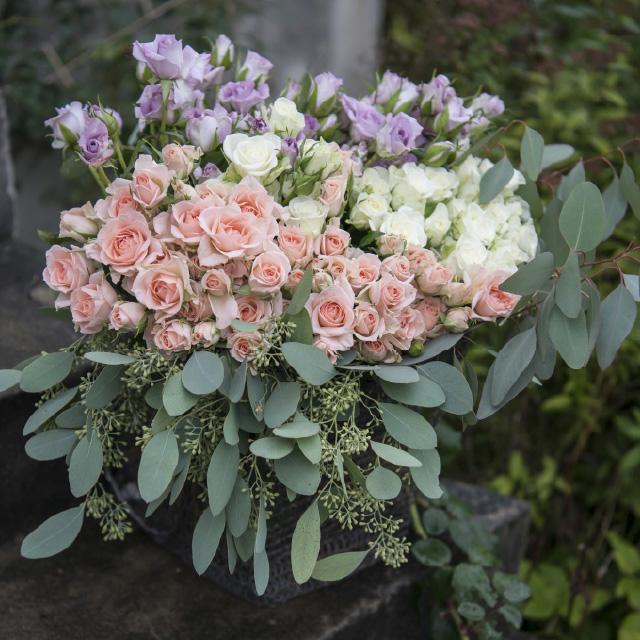 lilla-rosa-hvite-duftrose.jpg