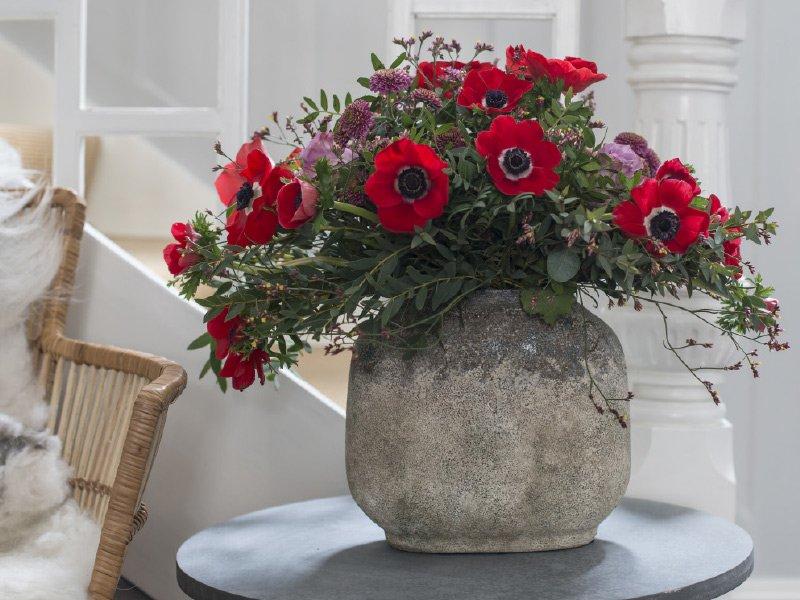 Rode-anemoner.jpg