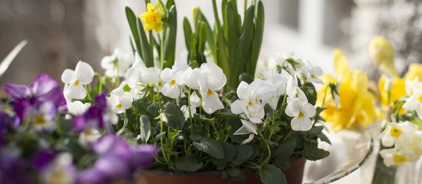 Blomster til påske