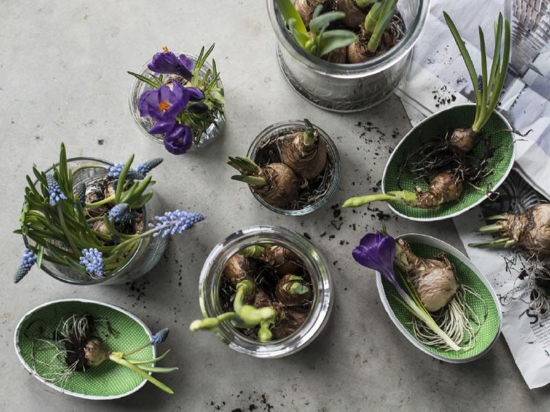 Lokplanter-er-fine-aa-sette-i-norgesglass.jpg