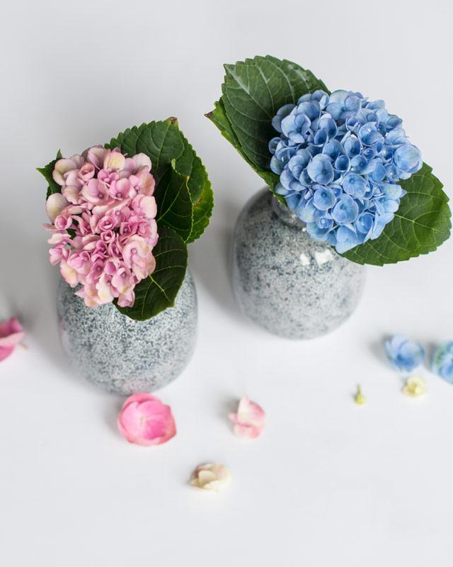 hortensia-magical-blaa-rosa.jpg
