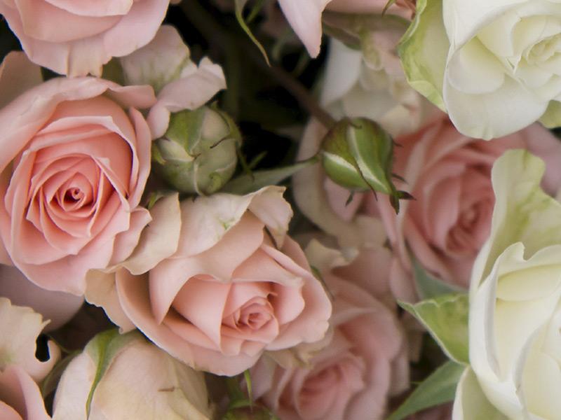 grenroser-rosegaranti-2.jpg