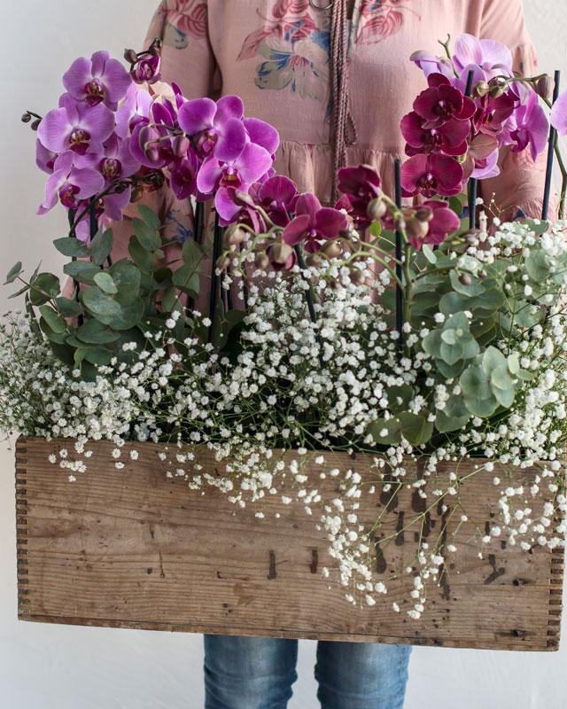 phalaenopsis-orkide-import-kasse.jpg
