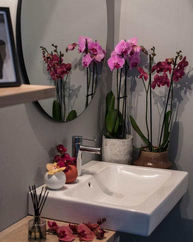 phalaenopsis-orkide-passer-i-alle-rom-3.jpg