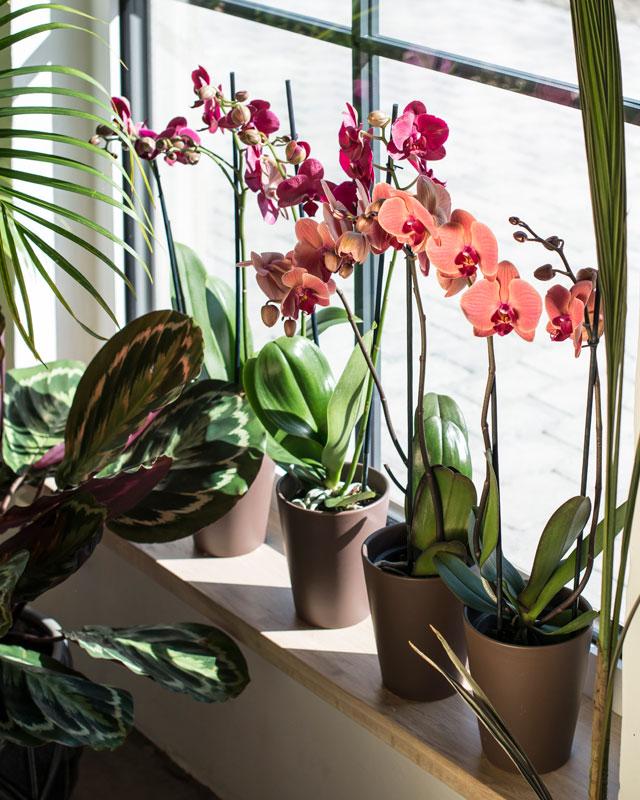 phalaenopsis-orkide-planting-glassvase-2.jpg
