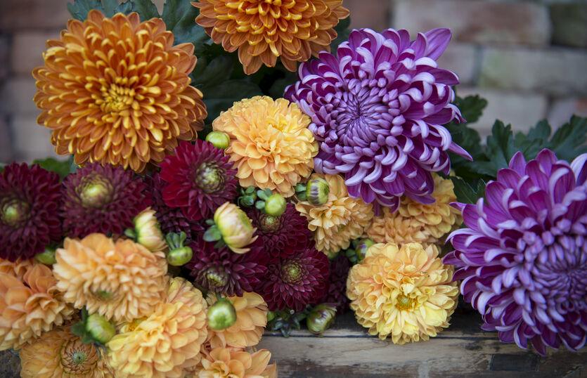 Pynt opp med norske potteplanter