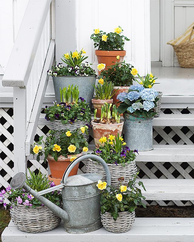 potteplanter2.jpg