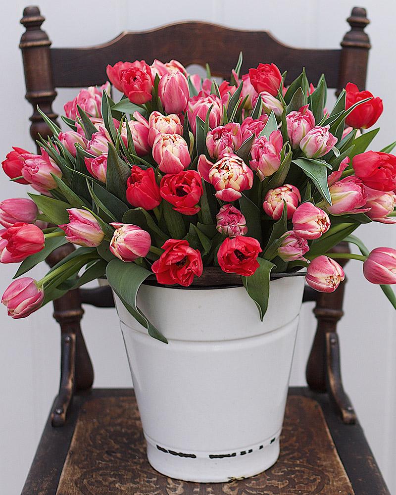 Ranveig_tulipaner1.jpeg