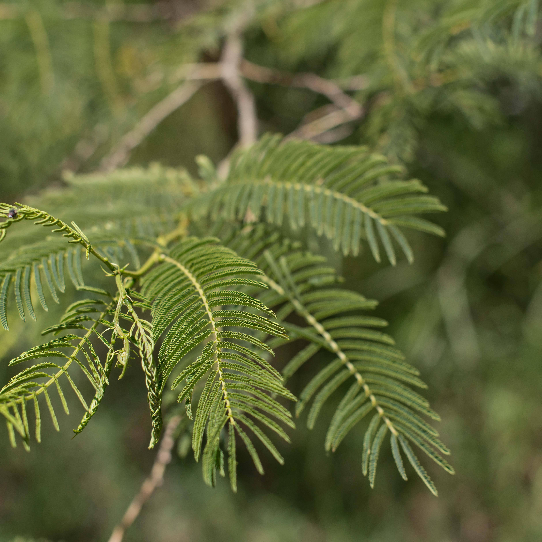 treplanting-i-kenya-gren-fra-tre.jpg