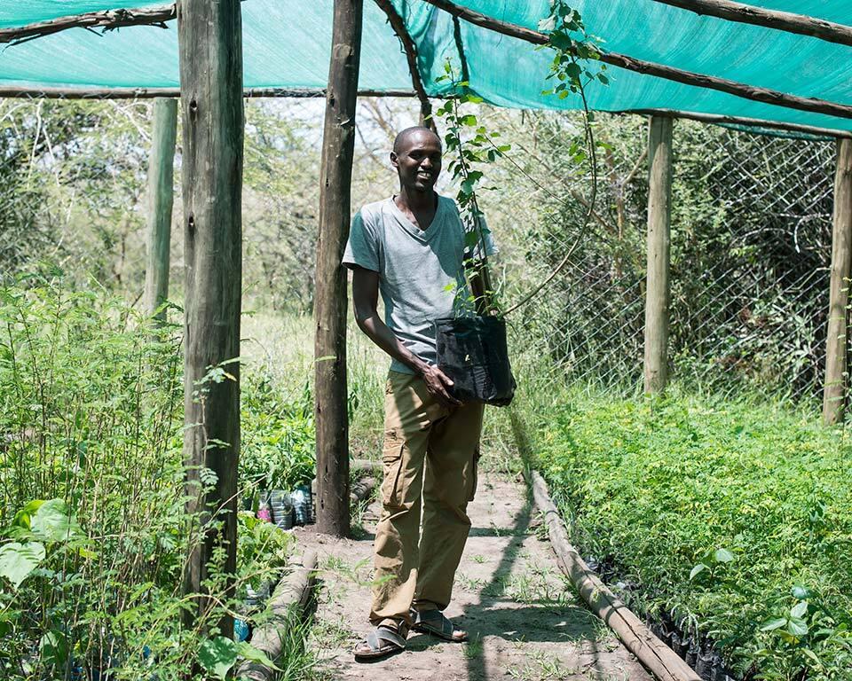 treplanting-i-kenya-masai.jpg