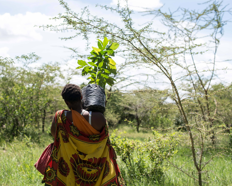 treplanting-i-kenya-masaikvinner-arbeider-2.jpg