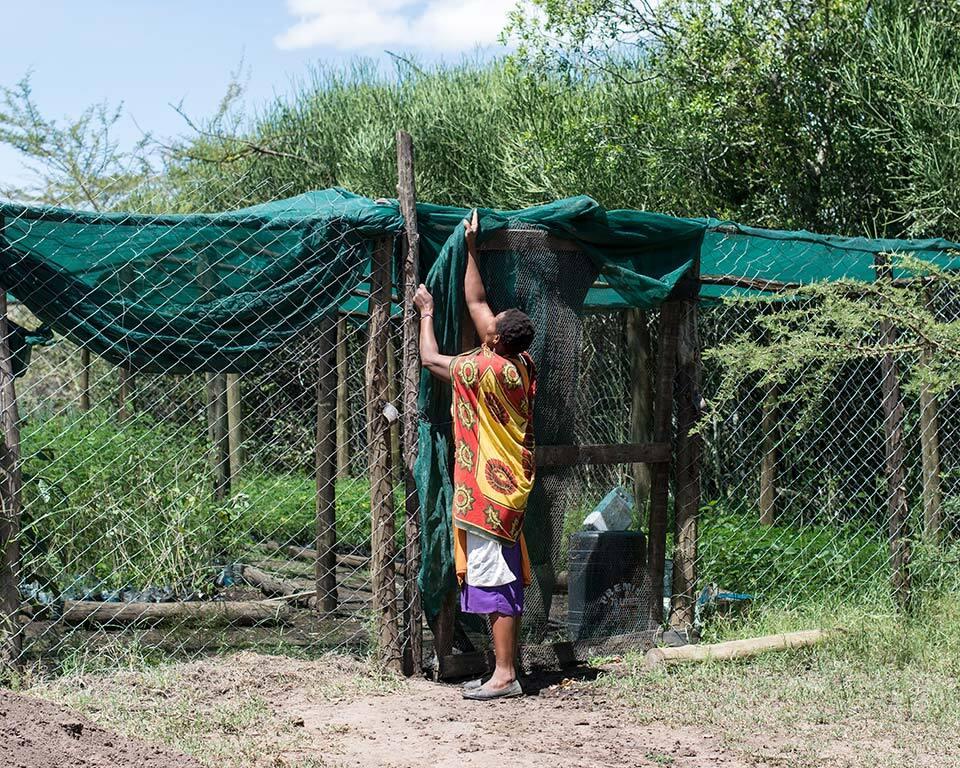 treplanting-i-kenya-masaikvinner-arbeider-4.jpg