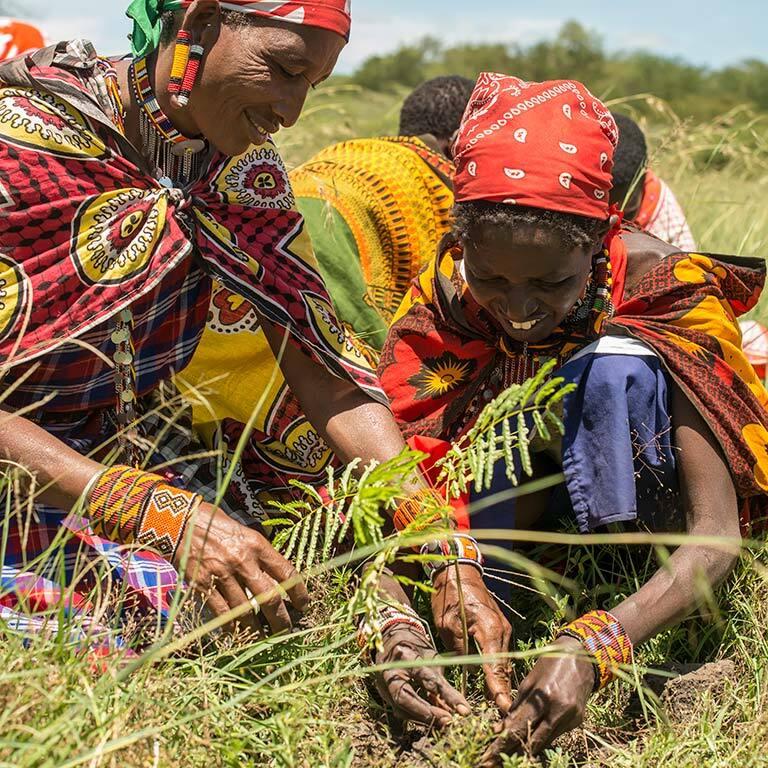 treplanting-i-kenya-masaikvinner-arbeider.jpg