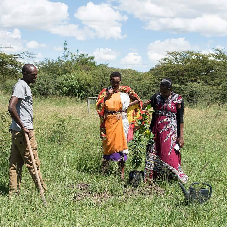 treplanting-i-kenya-masaikvinner-planter-2.jpg