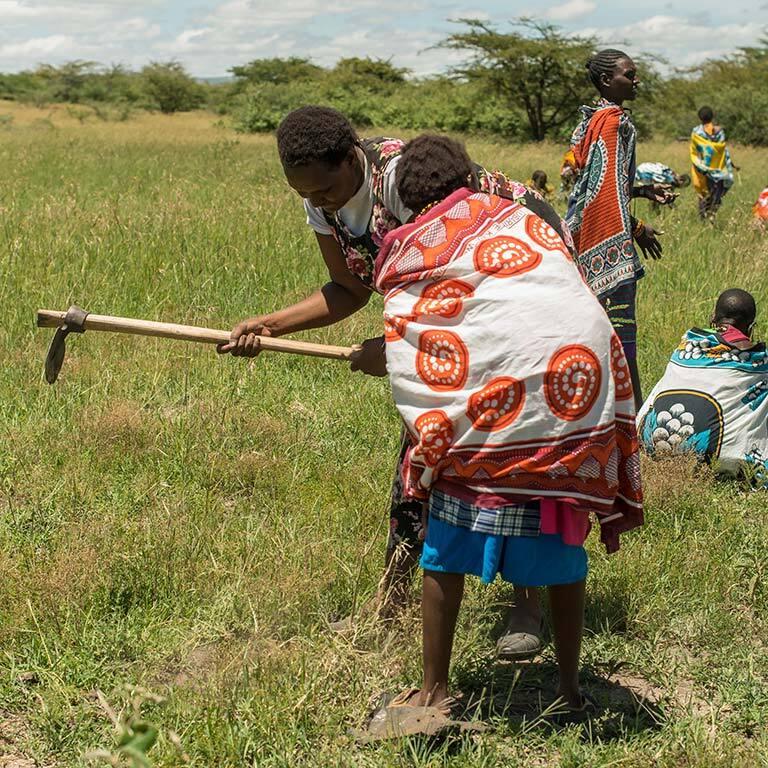 treplanting-i-kenya-masaikvinner-planter-og-luker.jpg