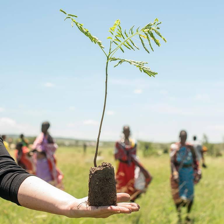 treplanting-i-kenya-tre-foer-planting.jpg