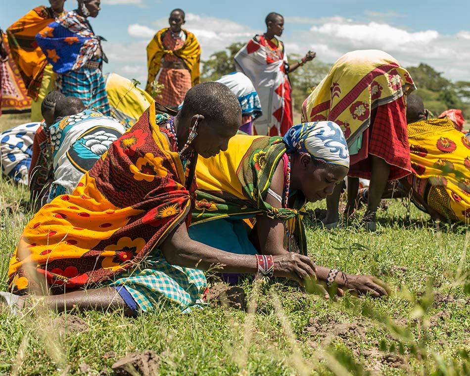 treplanting-i-kenya-masaikvinner-planter-1.jpg