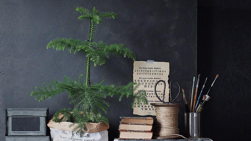Kjøp et tre - Plant et tre