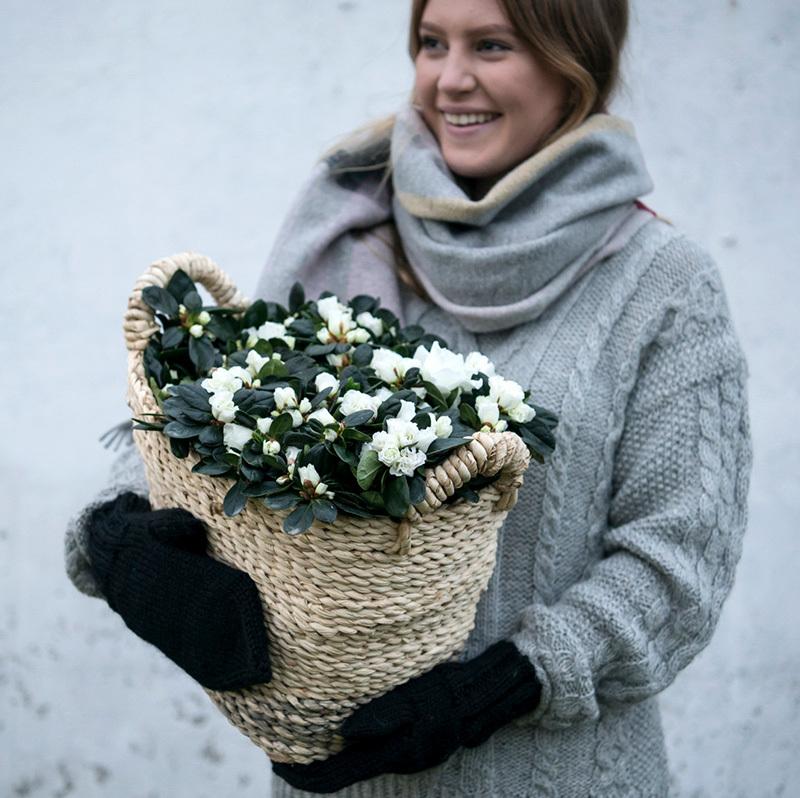 azalea-lyser-opp-i-vintermoerket-jente-holder-i-kurv.jpg