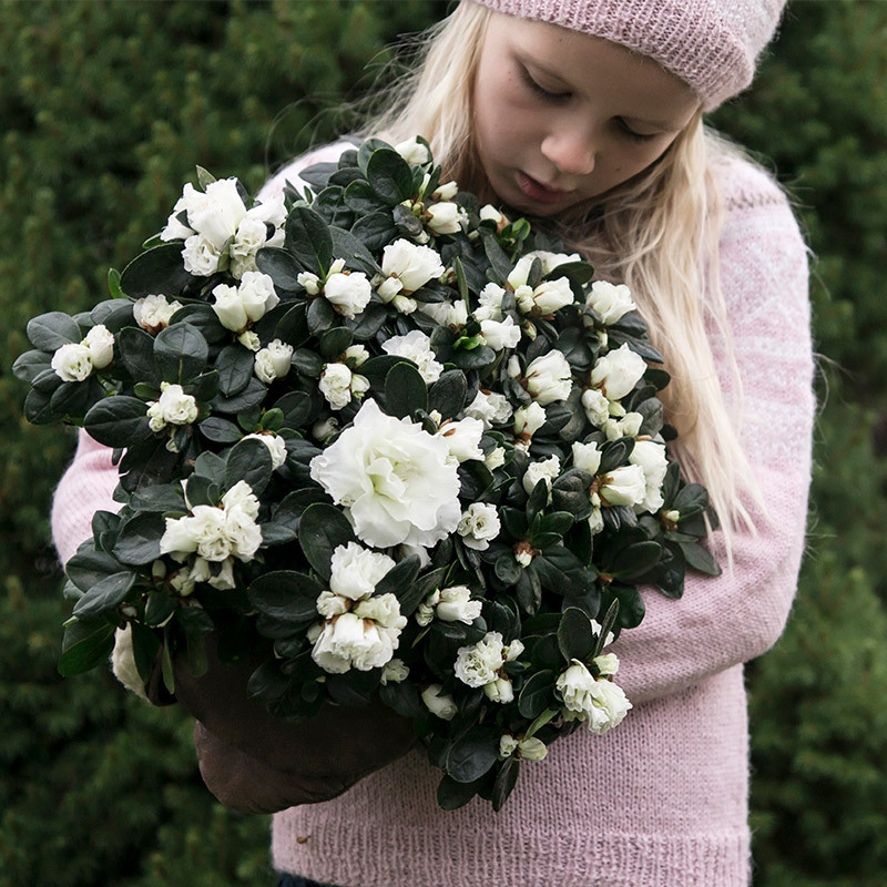 azalea-lyser-opp-i-vintermoerket-jente-azalea-pernille-nysgjerrig.jpg