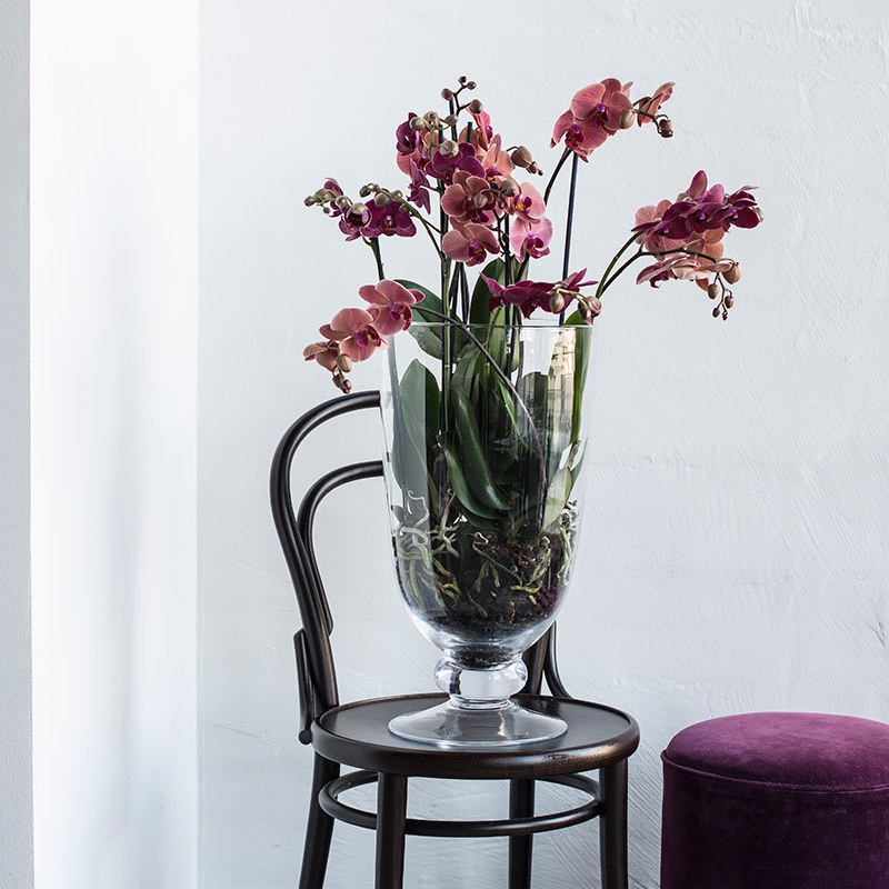 eksotisk-nyttaar-med-phalaenopsis-orkide-i-stor-vase-stol.jpg