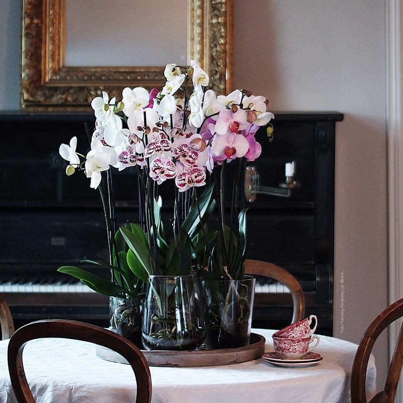eksotisk-nyttaar-med-phalaenopsis-orkide-i-vase-borddekking.jpg