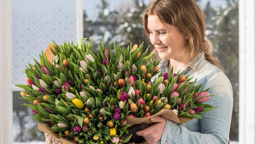 Sett farge på tilværelsen med<br/> norske tulipaner